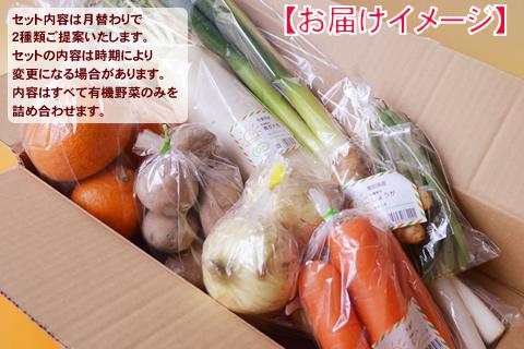3月有機野菜セット