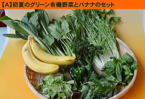 5月の有機野菜セット
