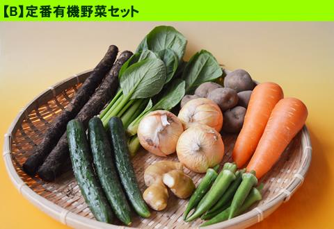 6月の有機野菜セット