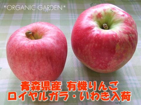 有機りんご「ガラ」・「いわき」入荷