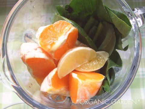 有機野菜でグリーンスムージー 03