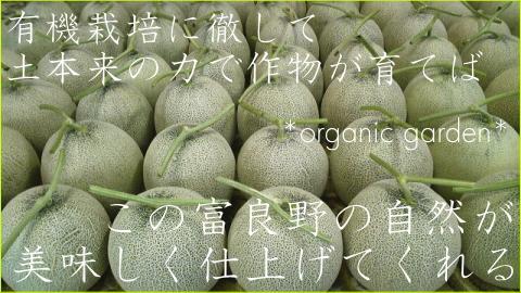 北海道中富良野産 有機栽培メロン