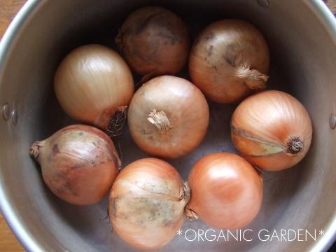 有機ミニ玉ねぎの丸ごとスープ煮02