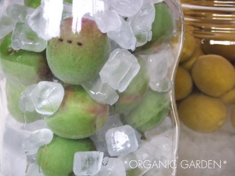 梅ジュースの作り方11