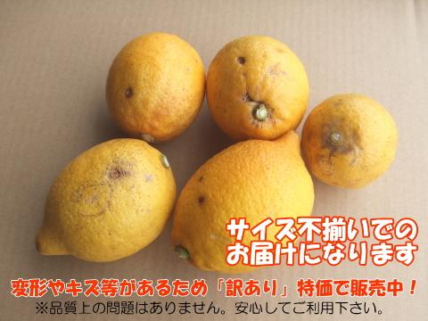 【訳あり特価】国産有機レモン