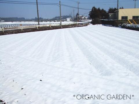 雪に覆われた畑*オーガニックガーデン*